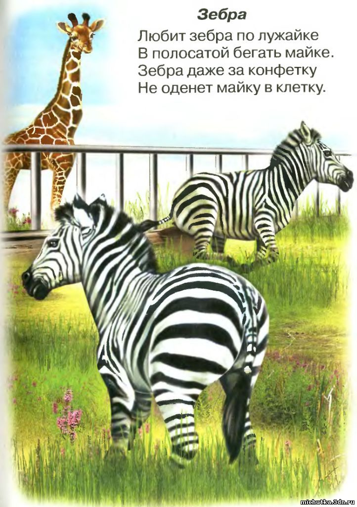 Стих про зебра для детей