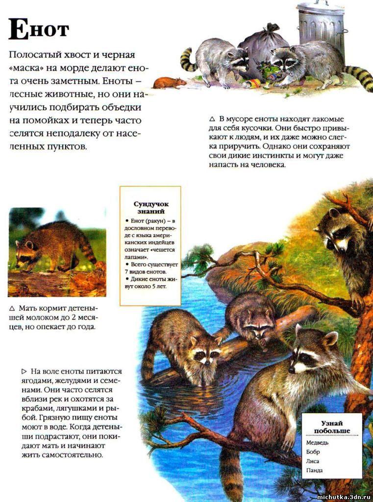 животных дошкольникам в картинках о
