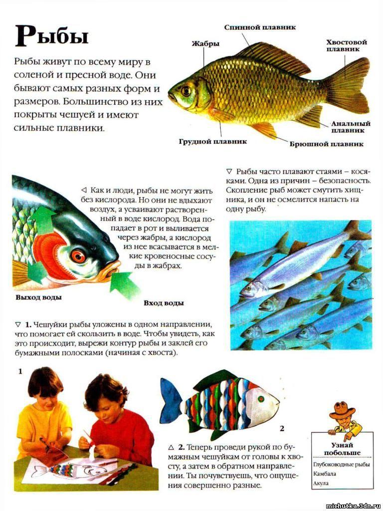 история про рыбалку детей