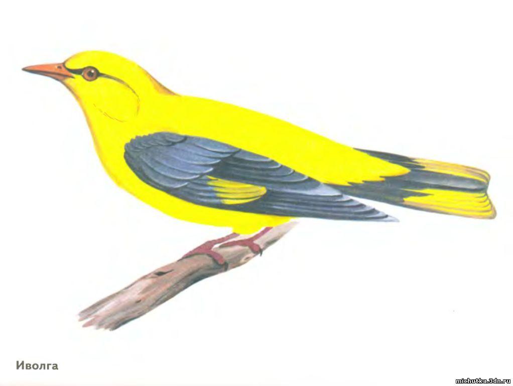 лесные птицы