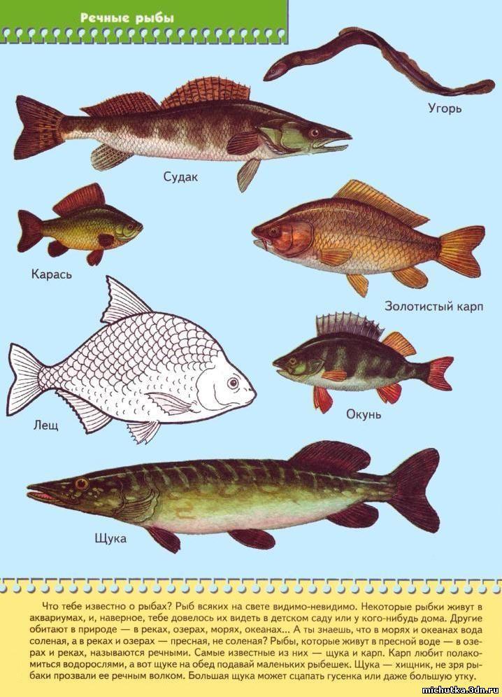 морская рыбалка для детей