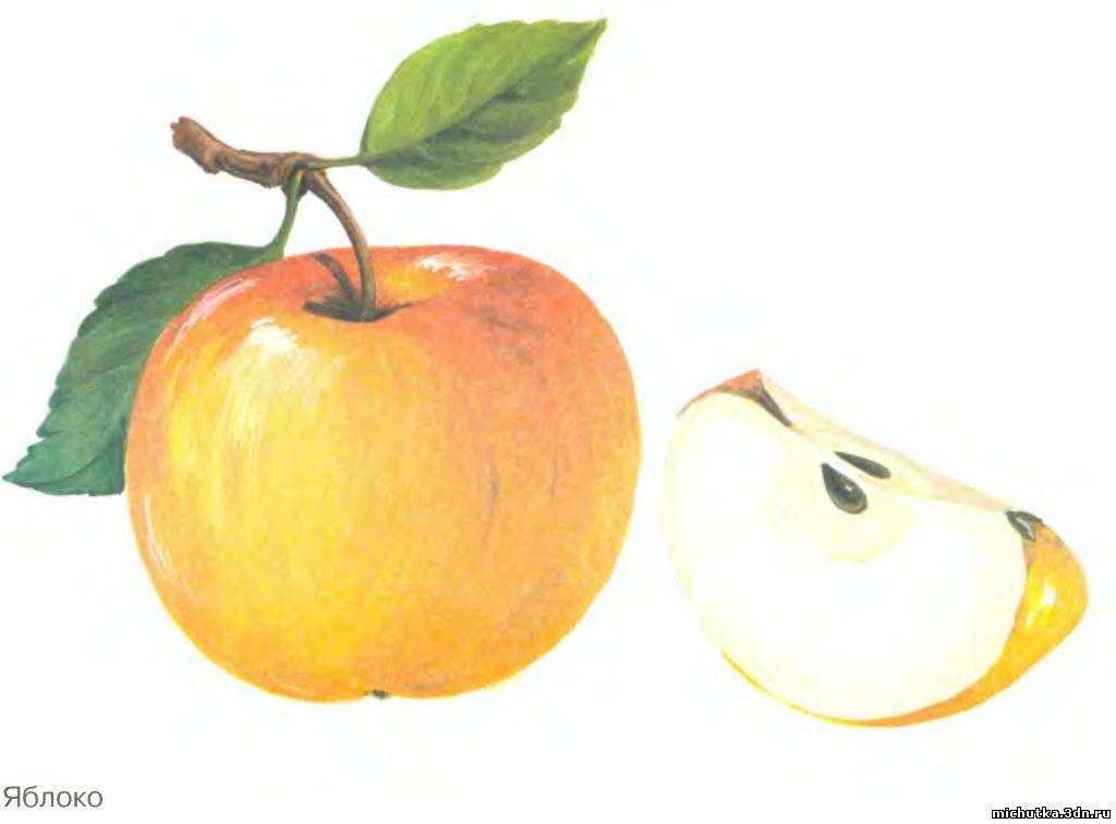 знакомство фрукты в картинках