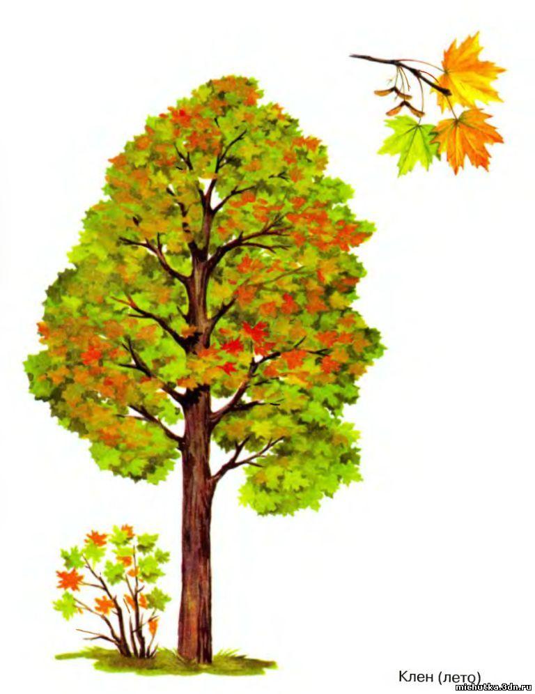 знакомство дошкольников с осенью