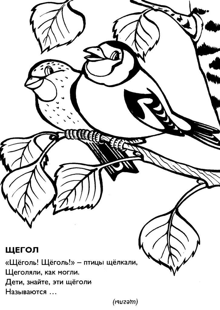 Раскраски птицах